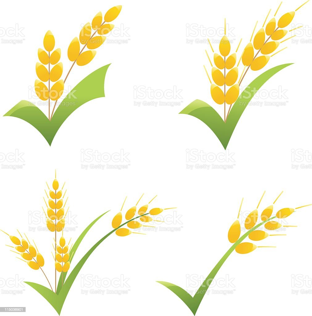 hight resolution of whole wheat grain symbol on green check clipart icons royalty free whole wheat grain symbol