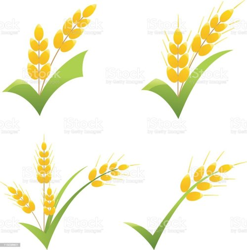 small resolution of whole wheat grain symbol on green check clipart icons royalty free whole wheat grain symbol