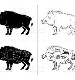 wild hog boar game meat cut diagram scheme elements set on rh istockphoto com bohr diagrams for o2 boar diagram oxygen and sulfur [ 1024 x 830 Pixel ]