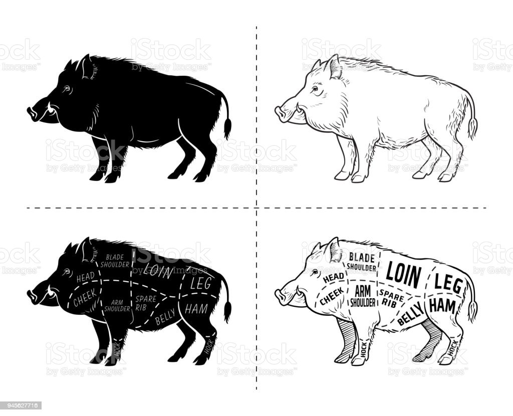 hight resolution of wild hog boar game meat cut diagram scheme elements set on rh istockphoto com bohr diagrams for o2 boar diagram oxygen and sulfur