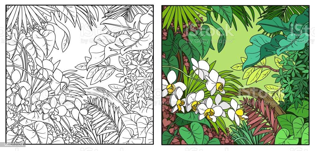 Malvorlage Dschungel Blätter