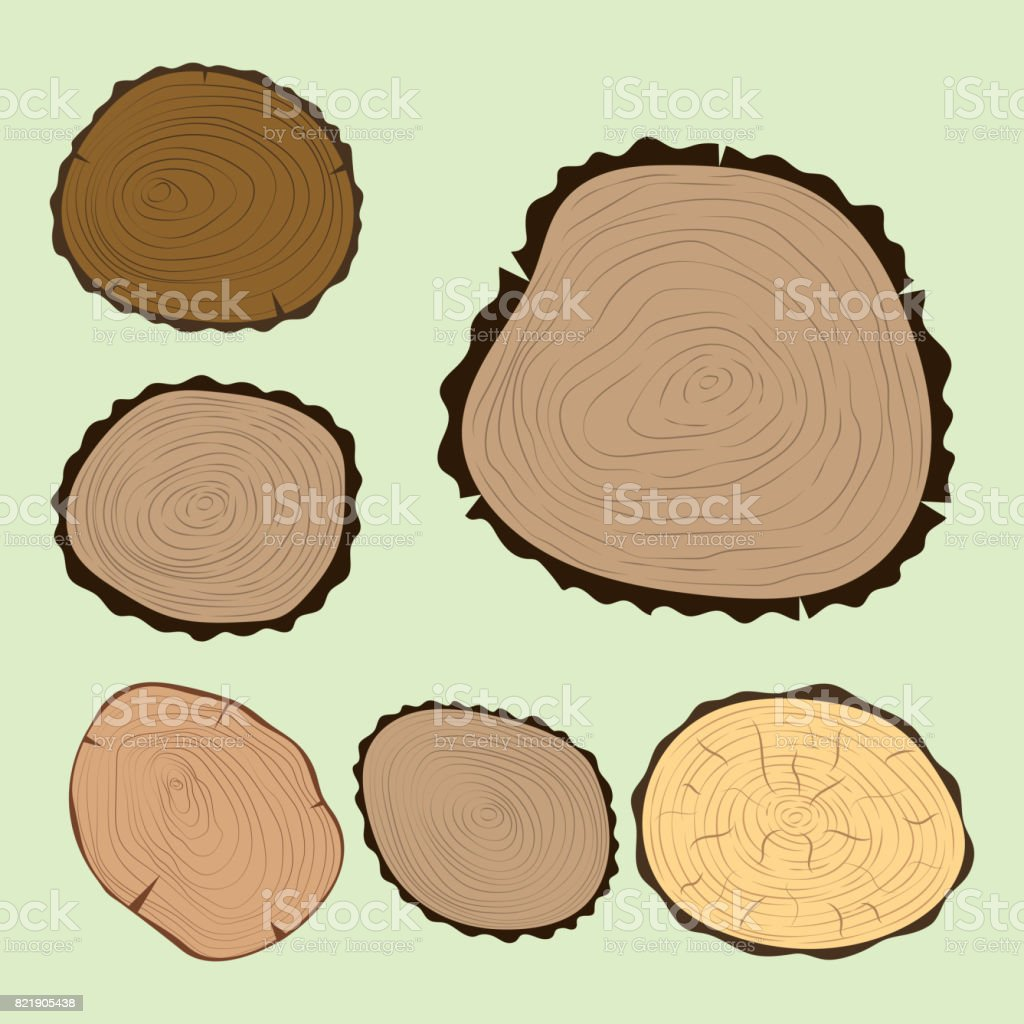 hight resolution of wood slice texture tree circle cut raw material set detail plant years history textured rough forest
