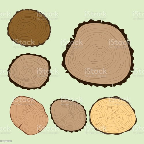 small resolution of wood slice texture tree circle cut raw material set detail plant years history textured rough forest