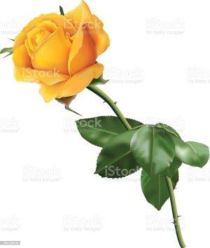 yellow rose clip vector illustrations graphics vectors royalty cartoons