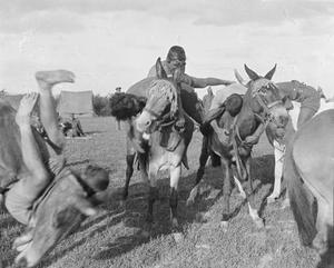 Men of an Indian transport unit wrestling whilst mounted on mules at a sports meeting near Salonika in May 1916. THE MACEDONIAN CAMPAIGN 1915 - 1918