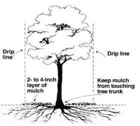 Deep Roots September 2011 Newsletter :: Deep Roots Garden