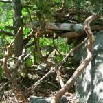 skog förskola norrmalm