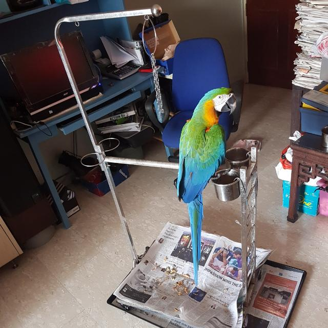 brand new macaw parrot