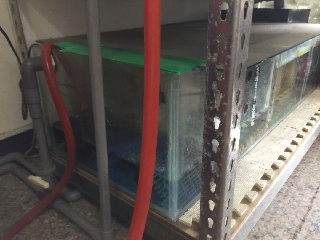 4*2*1.5尺3層進出水配管底濾系統魚缸組, 寵物用品, 寵物用品在旋轉拍賣