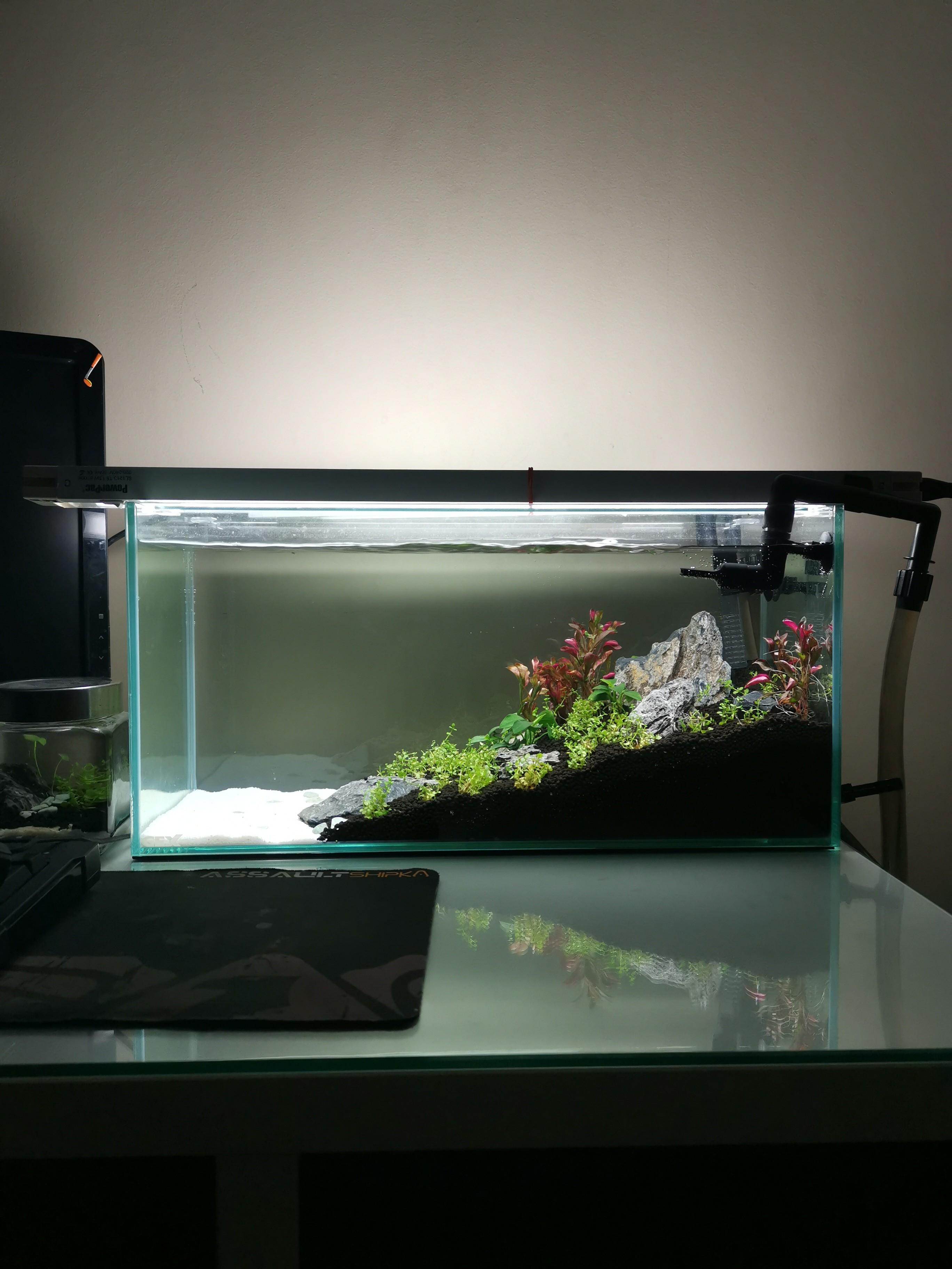 Aquascape Mini Sederhana : aquascape, sederhana, Aquascape, Ideas:, Aquarium