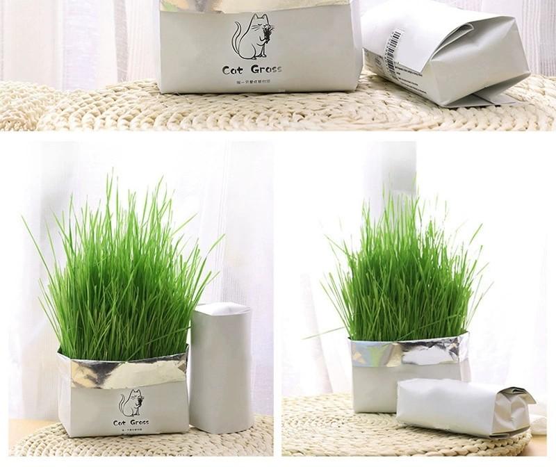 小麥草 貓草 無添加簡單種植, 寵物用品, 寵物食品 - Carousell