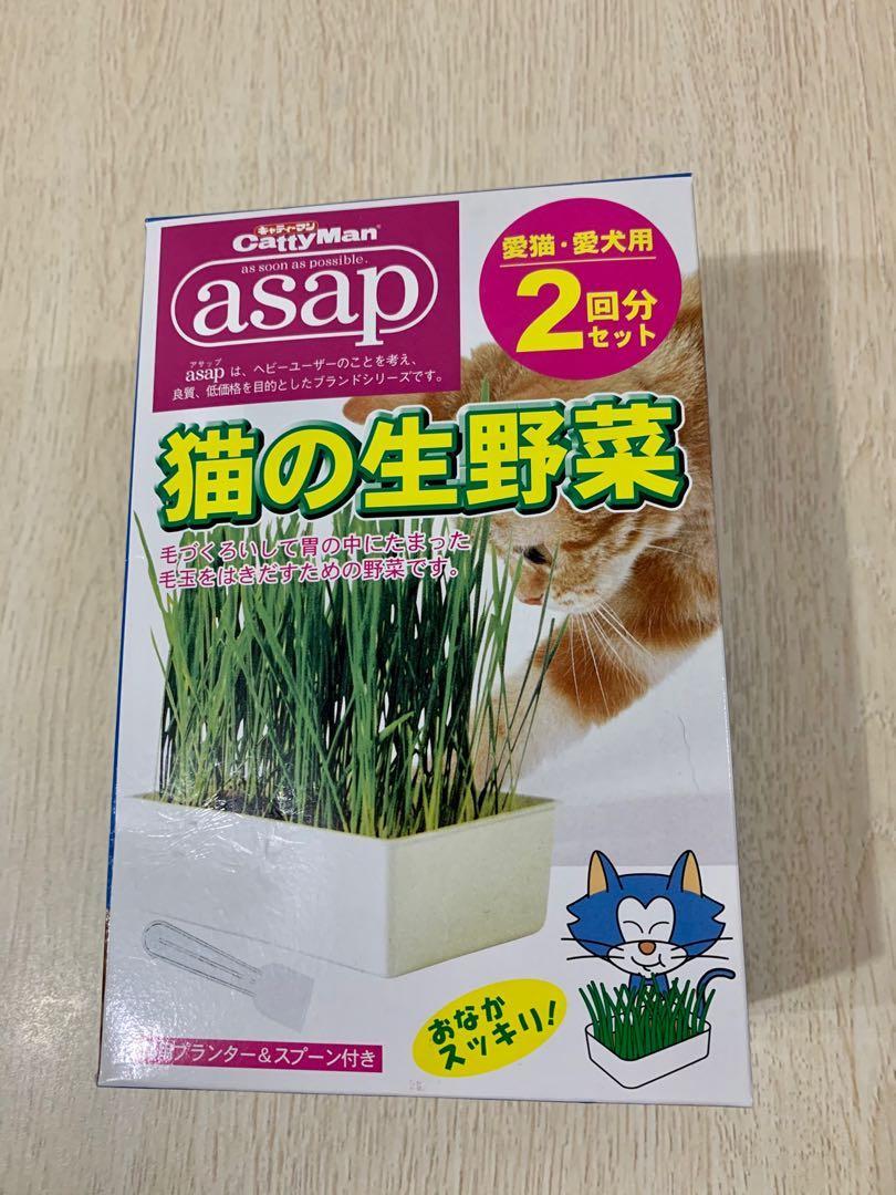 日本貓草種植套裝一份, 寵物用品, 寵物食品 - Carousell