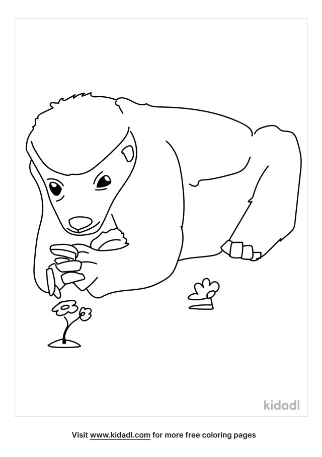 Honey Badger Coloring Pages  Free Animals Coloring Pages  Kidadl