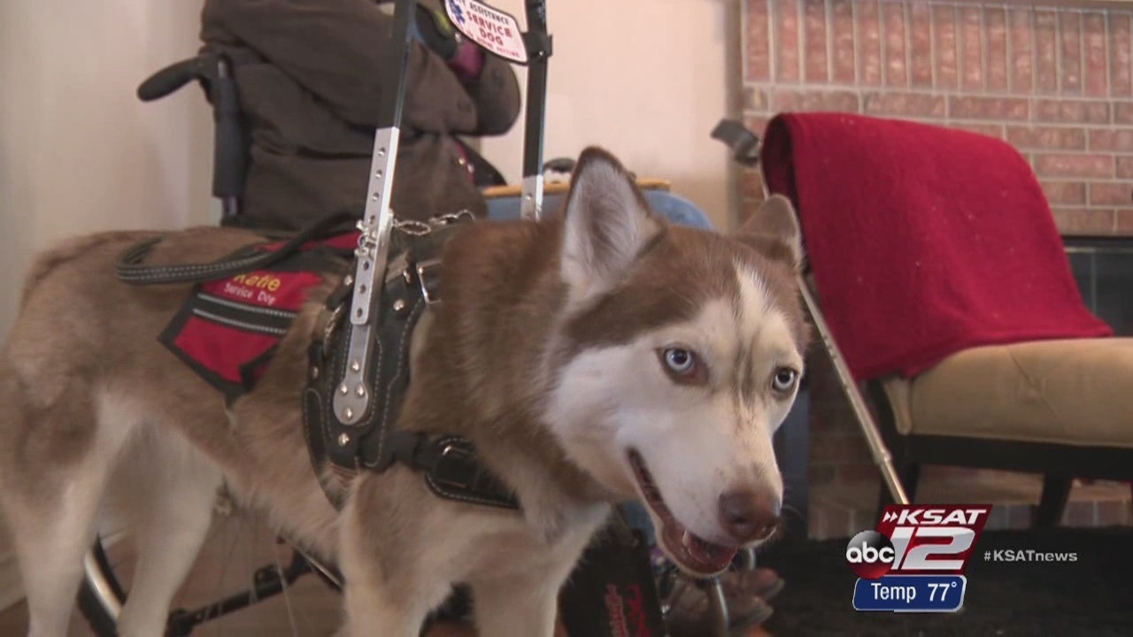 Ease of online service dog registry pollutes legitimate needs
