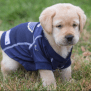 Blues Adopt Future Assistance Dog And You Can Help Name