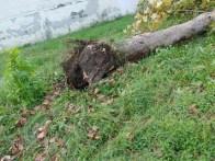 aversa area standard via garofano albero (1)
