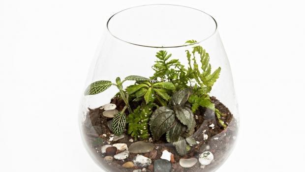 Un giardino in bottiglia o in barattolo