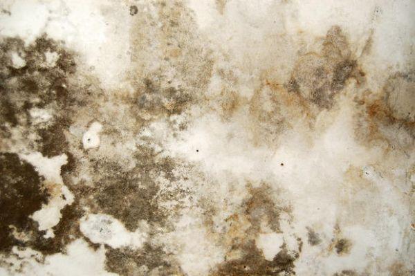 È una speciale pittura antimuffa, lavabile, traspirante, particolarmente efficace nella. Spray Per Eliminare La Muffa In Casa
