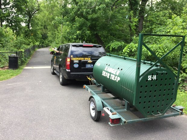 Bear spotted on Lafayette College campus and arts trail