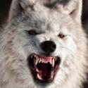 Way Wolf