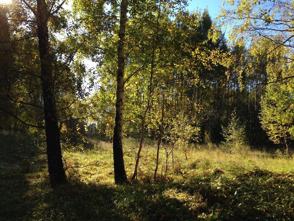 Skogslöpning