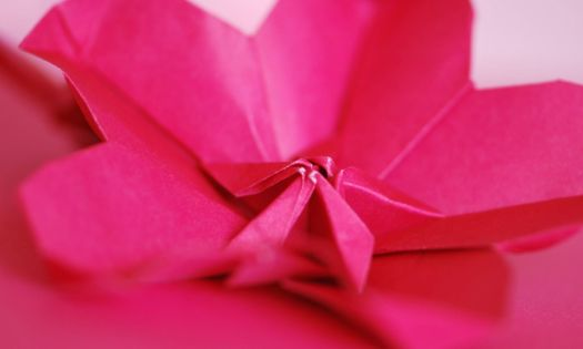 vika körsbärsblommor i papper