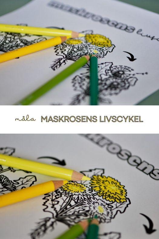 pinterest måla maskrosens livscykel