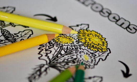 pedagogisk målarbild med maskrosens livscykel