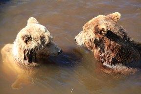 Björnar, Borås Djurpark