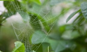 spindelnätsskonst