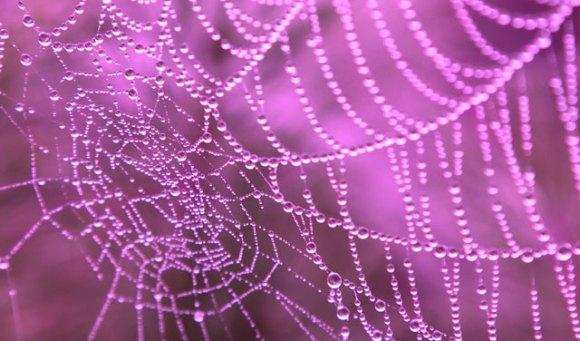 rosa spindelnät