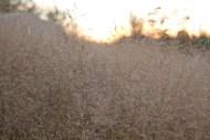 sommarstugan sexdrega gräs i solnedgång IMG_0933