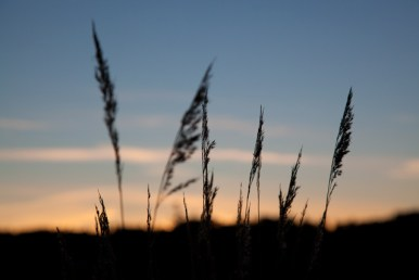 sommarstugan sexdrega gräs i solnedgång IMG_0938