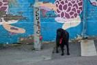 Hund & Grafitti