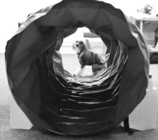 Agility Hundens hus tunnel stella IMG_1325