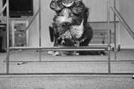 Agility Hundens hus hopp över hinder IMG_1361