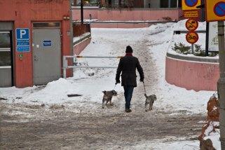 Hundar promenad snö