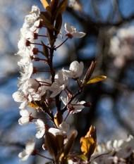 blomma i sol IMG_5717