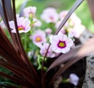 blomma IMG_7628