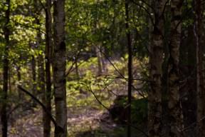 träd IMG_8146