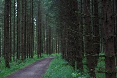 skogsväg IMG_9032