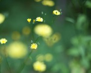 gul blomma IMG_0200
