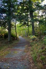 skog IMG_3899