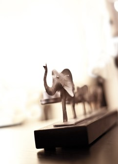 elefant-IMG_4461