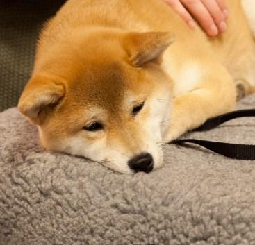 my-dog-IMG_5977