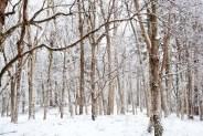 skog-snöIMG_5770