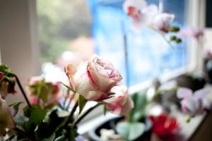 blomma-nya-lyanIMG_6600