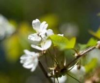 blomma-slottsskogenIMG_6697 - Kopia