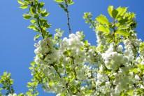 blommor-slottsskogenIMG_6703 - Kopia