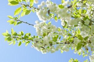 blommor-slottsskogenIMG_6704 - Kopia